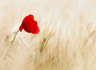 Poruka ohrabrenja iz Božjeg srca koja će vam izmamiti suze na oči