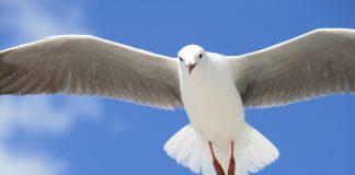 4 grijeha protiv Duha Svetoga