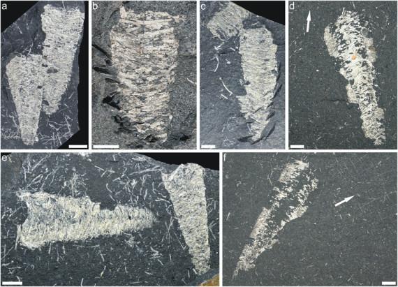 295 milijuna godina stara svila
