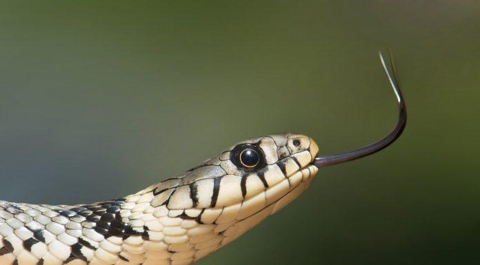 Je li Sotona doslovno bio zmija u edenskom vrtu?
