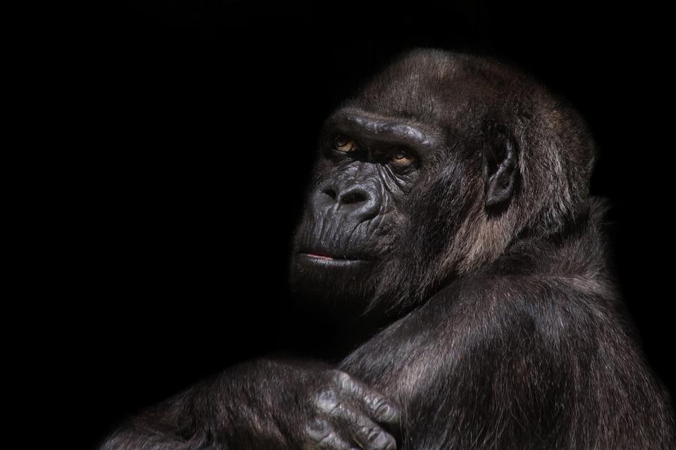 evolucionisti