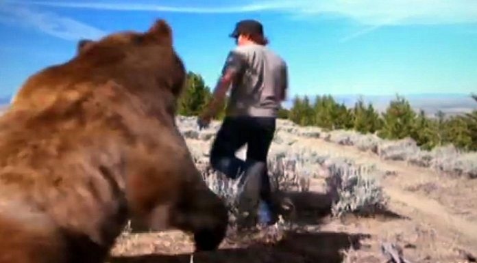 spasio napuštenog medvjedića