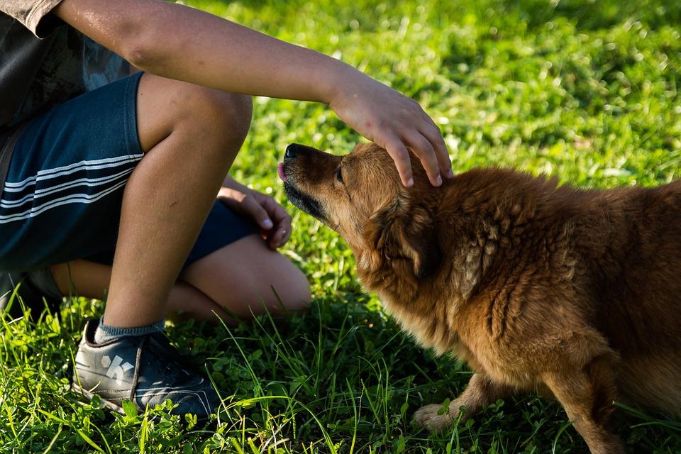 kanada dopušta seksualne radnje sa životinjama
