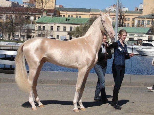 konj 1