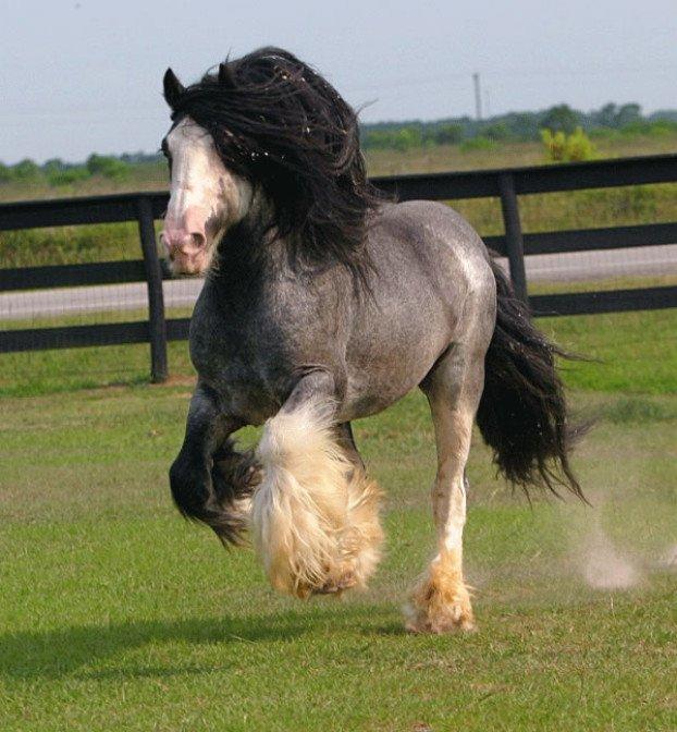 konj 5
