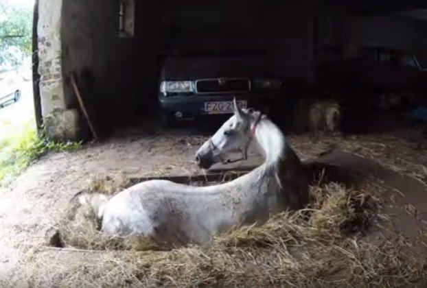 kobila-na-samrti-2