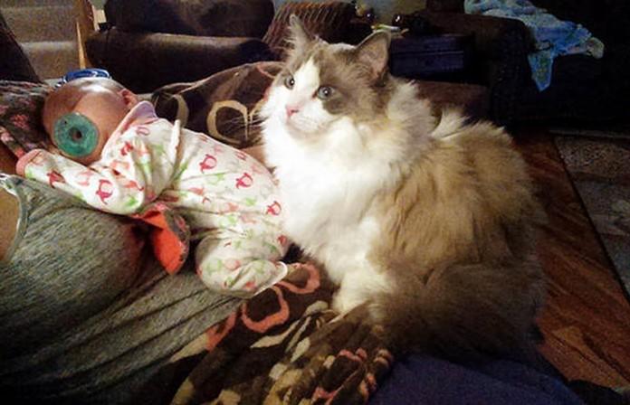 mačka tata tuče bebu