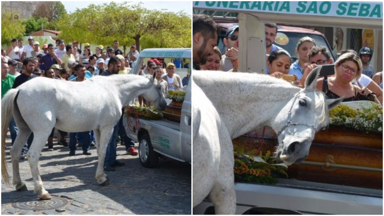 konj žali za pokojnim vlasnikom