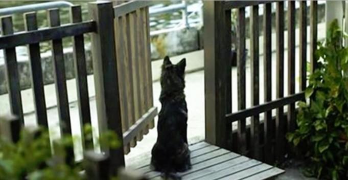 pas čeka