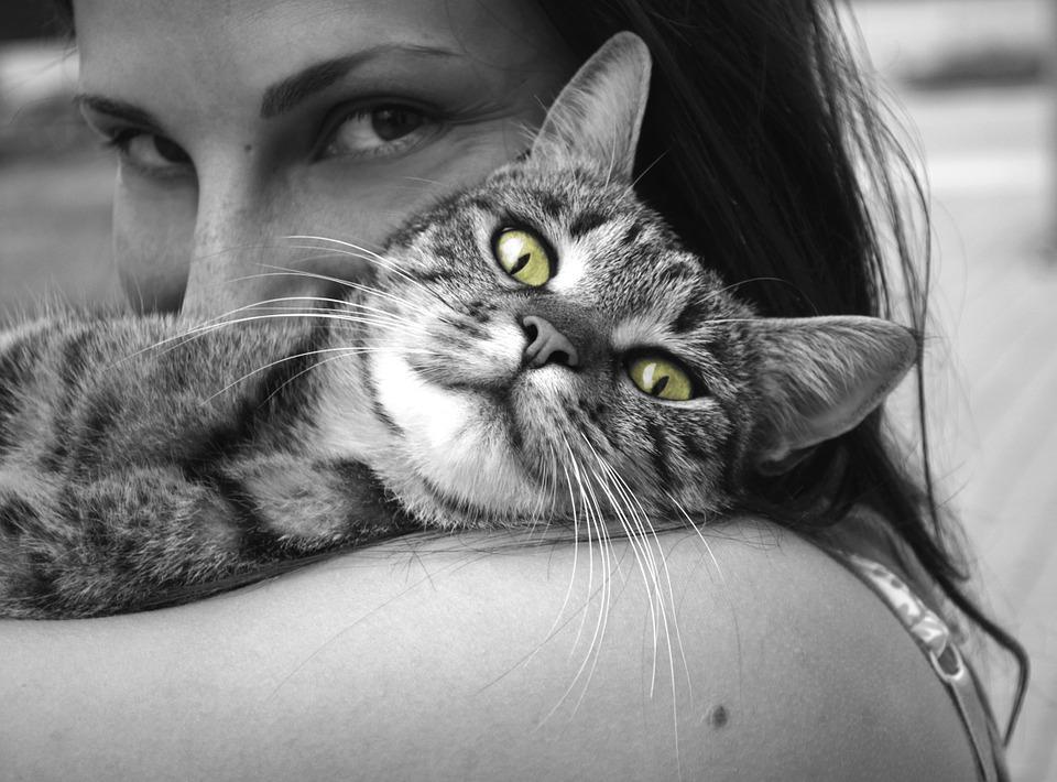 mačke produžuju život