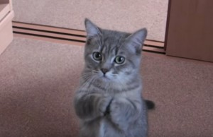 mačka neobičan trik