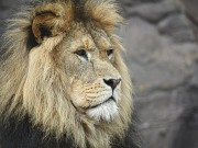 lavovi spasili kršćane