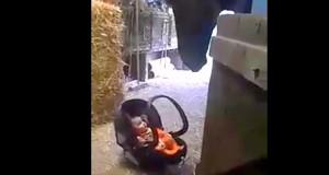 konj njiše bebu