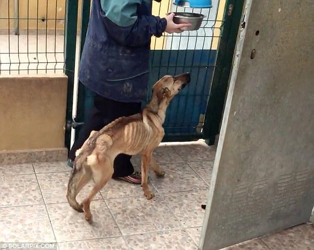 izgladnjeli pas 2