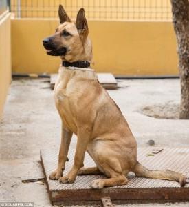 izgladnjeli pas 4