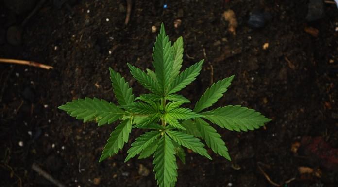 10 stvari koje bi kršćani trebali znati o marihuani