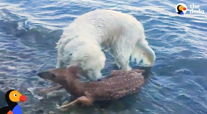 životinje spašavaju druge životinje