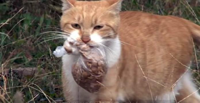 mačka lutalica hrana