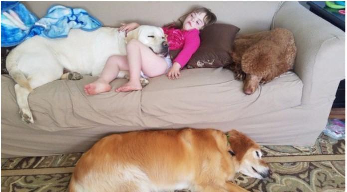 pas djevojčica dijabetes