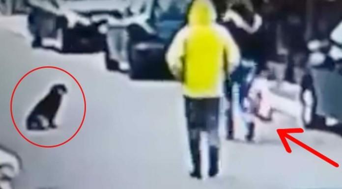 Pas spasio ženu od lopova na ulici u Podgorici