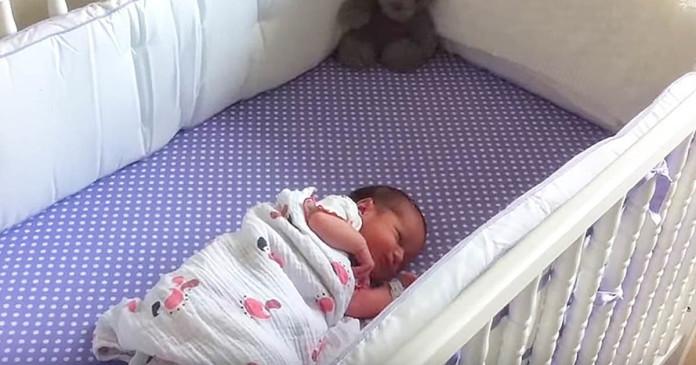 beba pas kod kuće