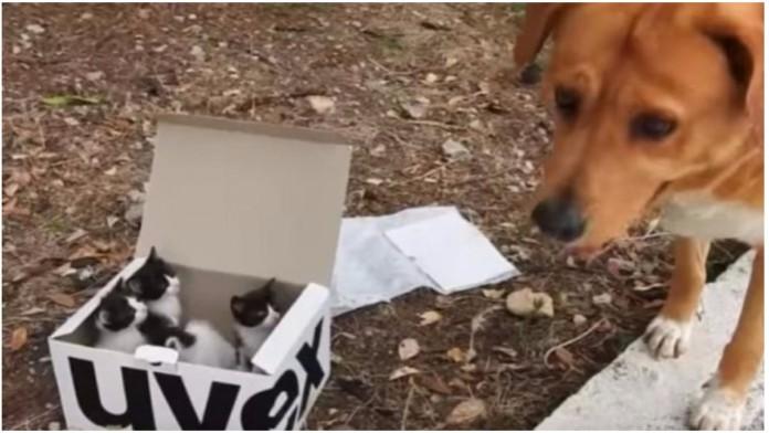 pas brine o napuštenim mačićima