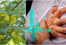 arjuna biljka liječi srčane bolesti