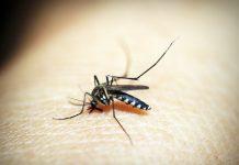 kako se riješiti komaraca