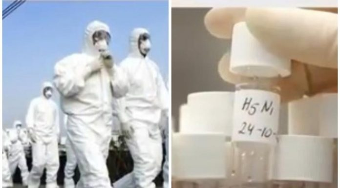 bolest x virus gripe