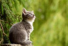 mačke ljekovite ljudsko zdravlje