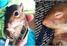 vjeverica posjećuje mladića