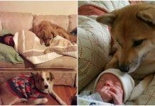 Bezuvjetna ljubav psi