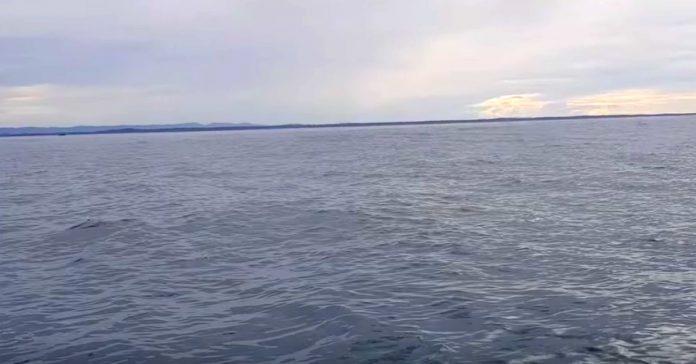 Dok je žena snimala kamerom voda je bila mirna, no ubrzo ih je šokirao veličanstven prizor