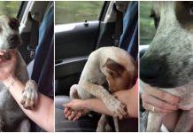 Pas tješio ženu koja je počela plakati nakon što ga je spasila