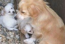 Susjedi iz Županje se ujedinili kako bi brinuli o kujici i njezinih pet štenaca