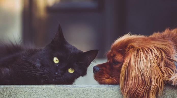 psi mačke razvod djeca