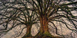 Što simboliziraju stablo života i stablo spoznaje dobra i zla