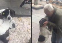 Našao je voljenog psa koji se izgubio prije 3 godine