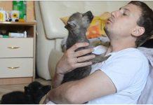 Vlasnik uči vuka da zavija