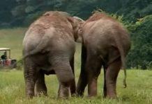 dva cirkuska slona