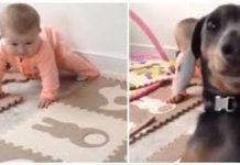pas ljubomoran na bebu