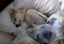 Pas je glumio da je mrtav kako bi izbjegao veterinara