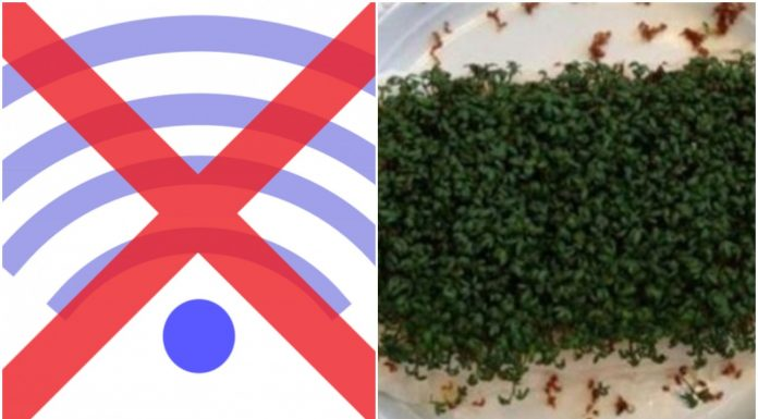 eksperimentom dokazale štetnost Wi-Fi zračenja