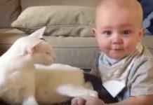 Beba je prišla mački i povukla je za noge, a njenu reakciju ćete promatrati u čudu