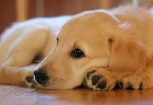 najljepše vrsta pasa na svijetu