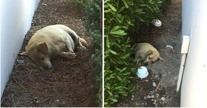 Napušteni pas je ležao u prljavštini, a istina o njegovim vlasnicima je sve šokirala