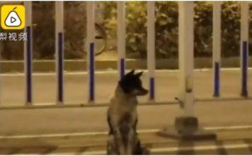 Odani pas 80 dana čeka svog vlasnika na prometnici na kojoj je poginuo
