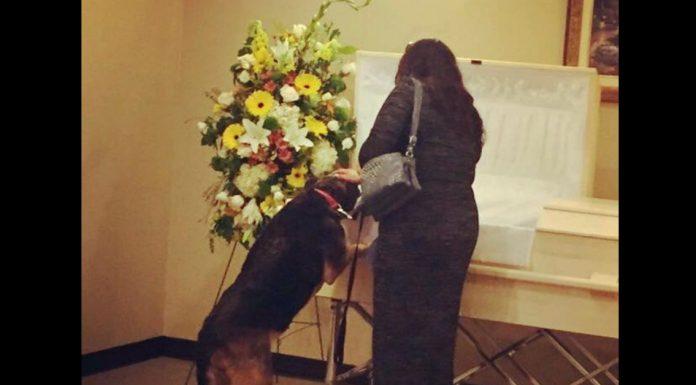 Pas je prišao lijesu pokojnog vlasnika, cijela obitelj je zastala u čudu