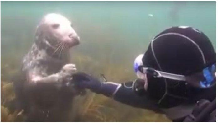 Tuljan je potapšao ronioca po ramenu, a onda ga zagrliio