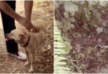 Pas kopajući zemlju pronašao bebu koja je bila živa zakopana